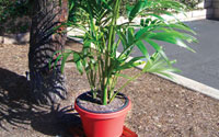 Picture of potted plant