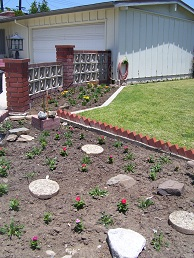 Picture of plantings