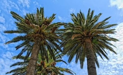 picture of palm treees